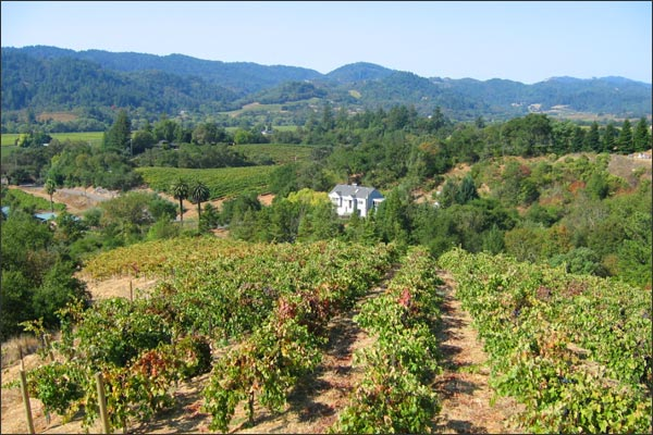 http://www.moniclaire.com/images/vineyards1.jpg